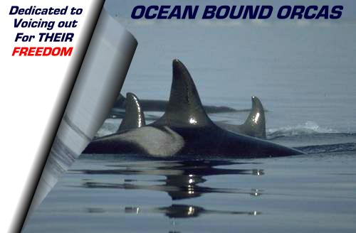 Ocean Bound Orcas: Dedicated to voicing out for THEIR freedom.